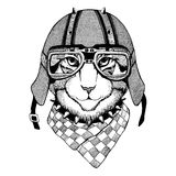 Wild cat Wild cat The cat wears a motorcycle helmet Hand drawn picture. Wild cat Wild cat The cat wears a motorcycle helmet Hand drawn image Stock Photo