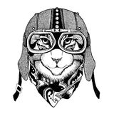 Wild cat Wild cat The cat wears a motorcycle helmet Hand drawn picture. Wild cat Wild cat The cat wears a motorcycle helmet Hand drawn image Royalty Free Stock Image