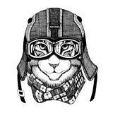 Wild cat Wild cat The cat wears a motorcycle helmet Hand drawn picture. Wild cat Wild cat The cat wears a motorcycle helmet Hand drawn image Stock Photography