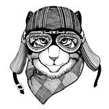 Wild cat Wild cat The cat wears a motorcycle helmet Hand drawn picture. Wild cat Wild cat The cat wears a motorcycle helmet Hand drawn image Stock Image