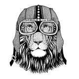 Wild cat Wild lion in motorcycle helmet with glasses. Hand drawn image Stock Photo