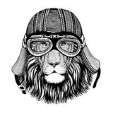 Wild cat Wild lion in motorcycle helmet with glasses. Hand drawn image Stock Image