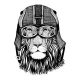 Wild cat Wild lion in motorcycle helmet with glasses. Hand drawn image Royalty Free Stock Photo