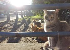 Cats in the sun royalty free stock photo