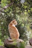 Wild cats are predominantly feral domestic cats in the Southern European countries. This are wild cats are predominantly feral domestic cats in the Southern stock photos
