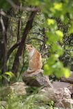 Wild cats are predominantly feral domestic cats in the Southern European countries. This are wild cats are predominantly feral domestic cats in the Southern royalty free stock image