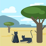 Wild cats. Two Panthers settled down a tree. Vector illustration Stock Photography