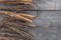 Wild cereal grass on wooden background with copy space Royalty Free Stock Images