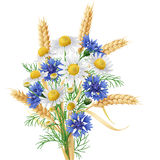 Wild Chamomile,  Cornflowers  and Wheat Ears Bunch. Stock Image