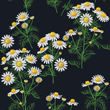 Wild Chamomile Pattern. Royalty Free Stock Image