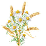 Wild Chamomile and Wheat Ears Bunch. Stock Photos