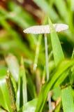 Wild champinjon Royaltyfria Bilder