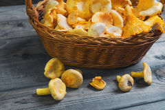 Wild Chanterelle Mushrooms in wicker basket Stock Photo