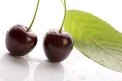 Wild Cherry Stock Image
