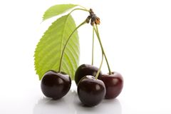 Wild Cherry Stock Photography