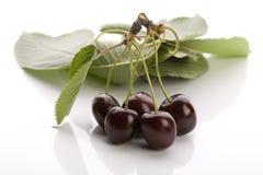 Wild Cherry Stock Photo