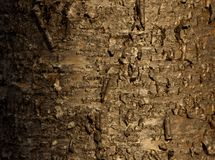Wild cherry bark Stock Photo