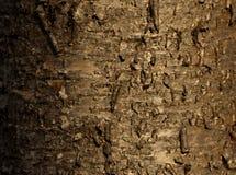 Wild cherry bark Stock Photo