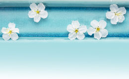 Wild cherry flowers in blue bowl with water , spa Royalty Free Stock Photography