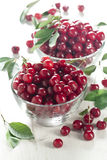 Wild cherry Stock Photo