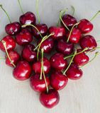 Wild cherry, sweet cherry,bird cherry,or gean. This species, in the rose family (Rosaceae), has a diploid set of sixteen chromosomes  All parts of the plant Royalty Free Stock Image