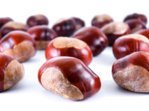 Wild chestnusts Stock Images