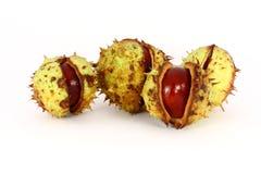 Wild chestnut Royalty Free Stock Photos