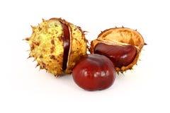 Wild chestnut stock photo