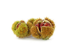 Wild chestnut Royalty Free Stock Image