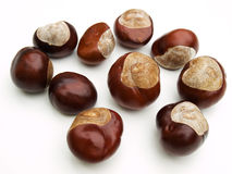 Wild chestnut Royalty Free Stock Photos