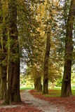 Wild chestnut trees in the park Royalty Free Stock Images