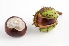 Wild chestnuts Royalty Free Stock Photos