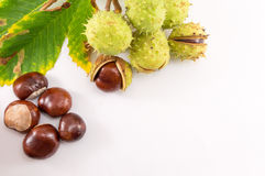 Wild chestnuts on a white background Stock Photos