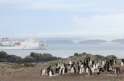 Wild chinstrap penguins and cruise ship in the background, Antarctica Royalty Free Stock Photography