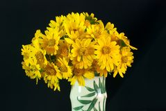 Wild Chrysanthemum Royalty Free Stock Image