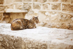Wild city cat sitting on a stone wall Royalty Free Stock Photo