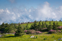 Grassy Mountain Bald Southern Appalachian Mountains Roan Highlands. Wild clouds clear behind a landscape of grassy balds and blooming Catawba Rhododendron in the Stock Photography