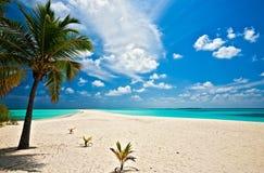 Wild coast. On uninhabited island in the Indian Ocean, Maldives stock images