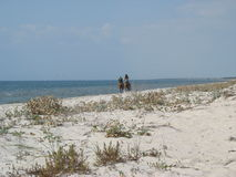 Wild coast of the Black Sea royalty free stock photos
