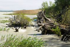 Wild coast at Lake Balaton. Hungary royalty free stock photography