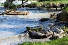 Wild coast at Lake Balaton. Hungary stock images