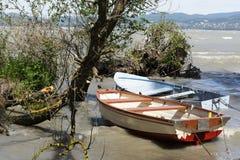 Wild coast at Lake Balaton. Hungary royalty free stock image