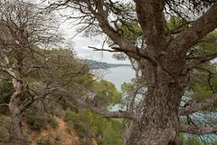 The wild coast. In the province of Girona royalty free stock photography