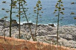 Wild plants, rocks and sea. Wild coastal plants on sea rocks with a sea below Royalty Free Stock Image