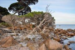 Wild Coastal Trees Stock Photos
