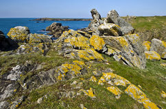 Wild Coastline landscape of Yeu Island. Wild Rocky Coastline in South of Yeu Island with spring flowers and green plants at foreground. France, Vendee, Pay de la Royalty Free Stock Photos