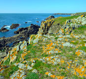 Wild Coastline of South of Yeu Island. Rocky Coastline of South of Yeu Island covered with green grass and spring flowers. France, Vendee, Pay de la loire Royalty Free Stock Image
