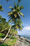 Wild Colombian Caribbean coast near Capurgana royalty free stock photo