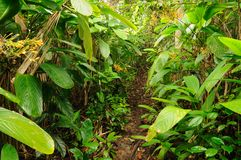 Wild Colombian Darien jungle royalty free stock photos