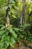 Wild Colombian Darien jungle Stock Images
